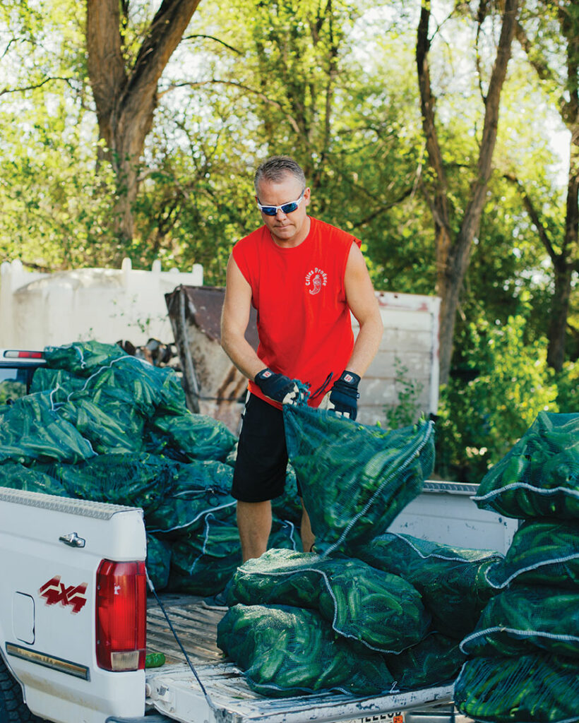 Man holds bags of chiles in the back of a truck