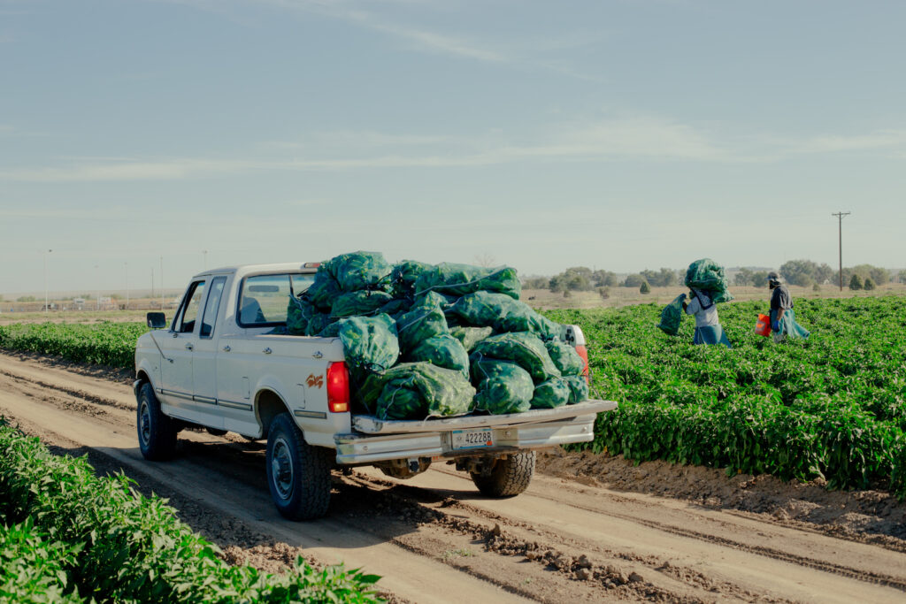 White pickup truck with bags of chiles piled in the bed.