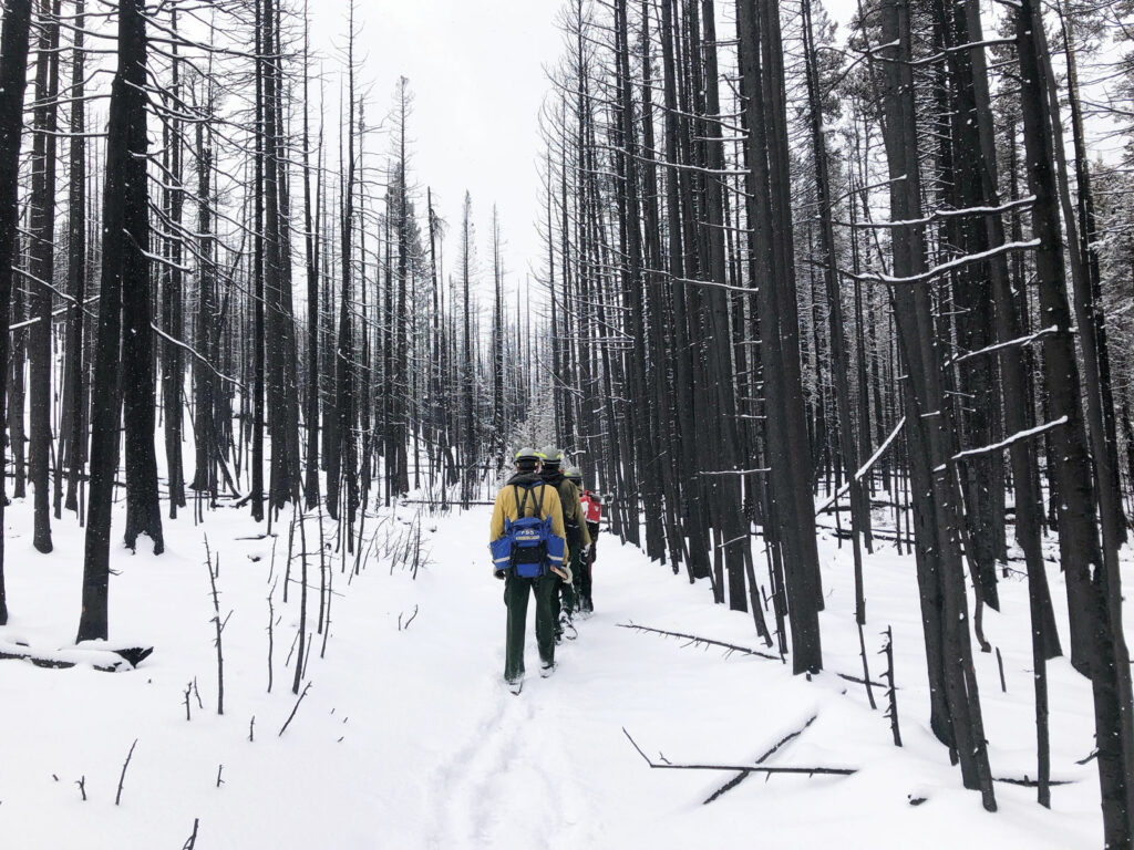 People walk in a line in the snow through the trees
