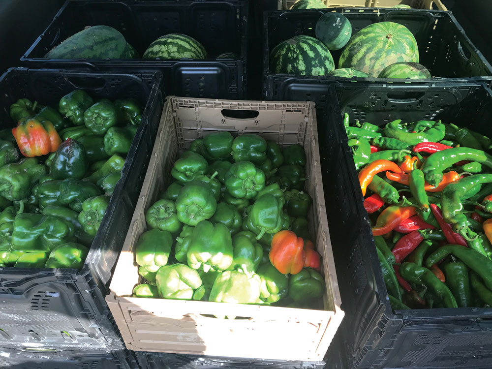 Crates of peppers and chiles.